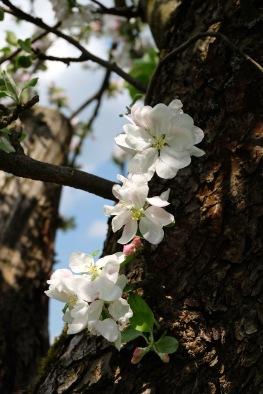 Kirschgärten 3 7