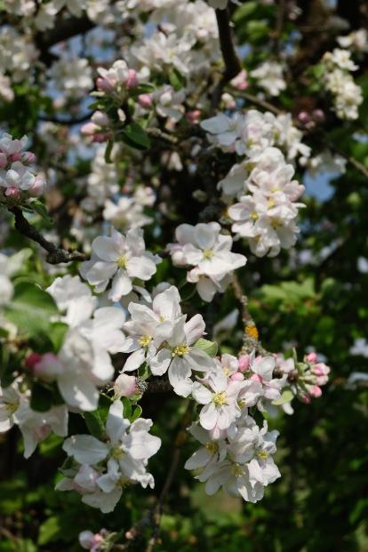 Kirschgärten 3 8