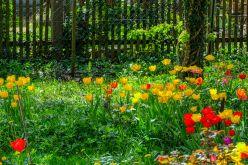 Frühlingsgarten1