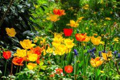 Frühlingsgarten2