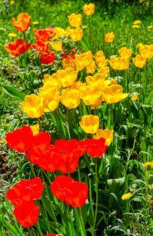 Frühlingsgarten3